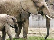 Elefanten sagen auch zu Kürbis nicht Nein.