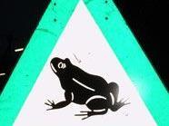 Achtung Autofahrer: Kröten-Warnschilder beachten