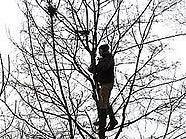 Demonstranten hatten in den Baumkronen ausgeharrt