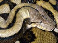 Schlangen-Schmuggel im Flugzeug