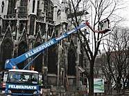 Zügig wird der Baum hinter der Votivkirche abgetragen.