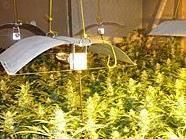Diese Pflanzen fand die Polizei in der Wohnung des beschuldigten 33-Jährigen.