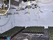 Gut getarnt betrieben die Marihuana-Bauern in Neubau ihre Plantage.