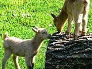 Ein Fest für Groß und Klein am Bauernhof in den Blumengärten Hirschstetten. Auch die tierischen Bewohner sind mit dabei.
