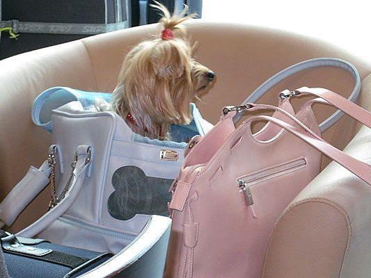 Lassen Sie Ihre Handtasche niemals unbeaufsichtig.