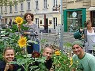 Hunderte Sonnenblumen blühen derzeit in 1070 Wien.