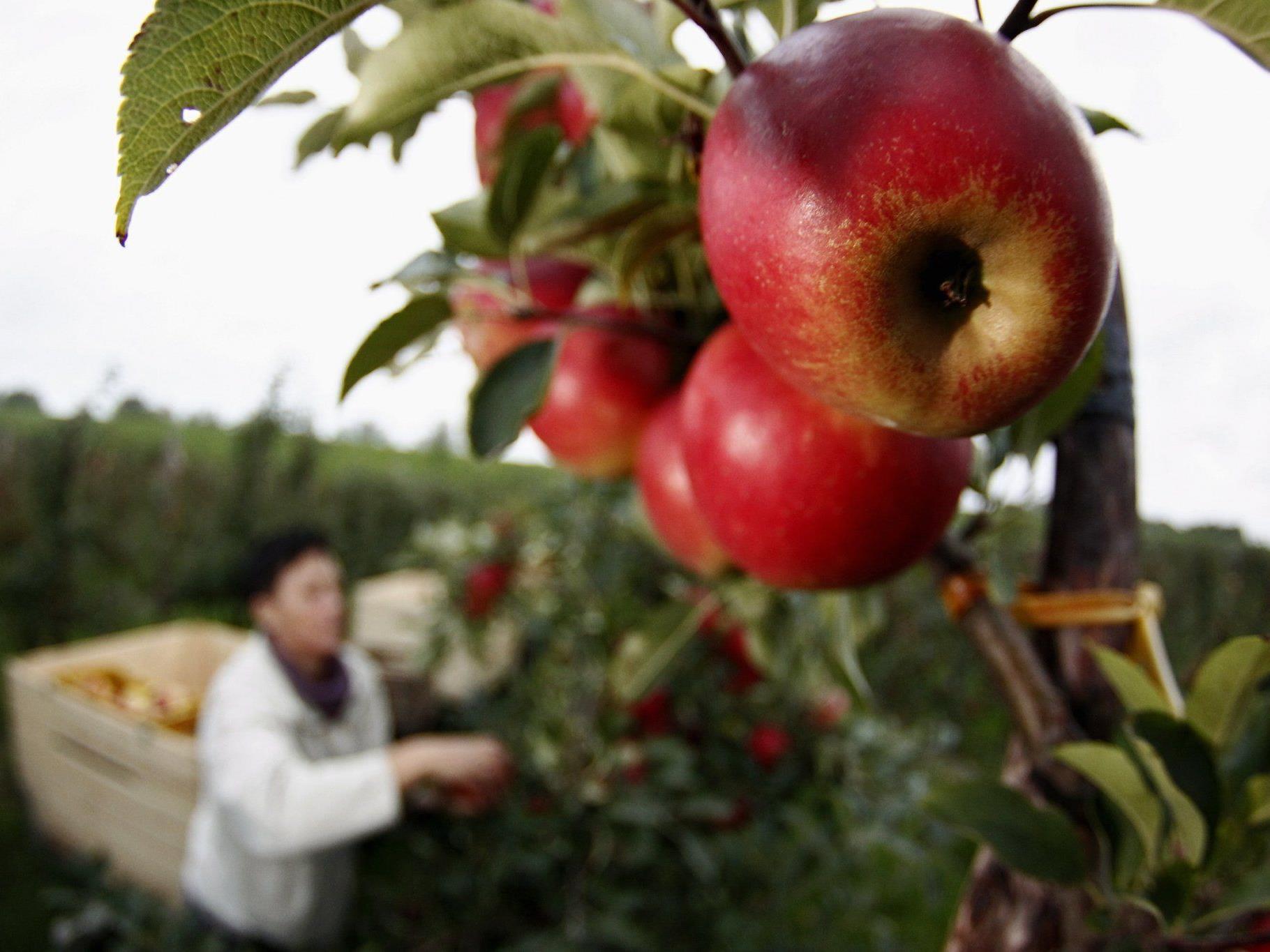 Schmackhafte Apfel-Kooperation