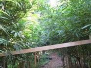 Zwei Cannabisplantagen in Österreich entdeckt