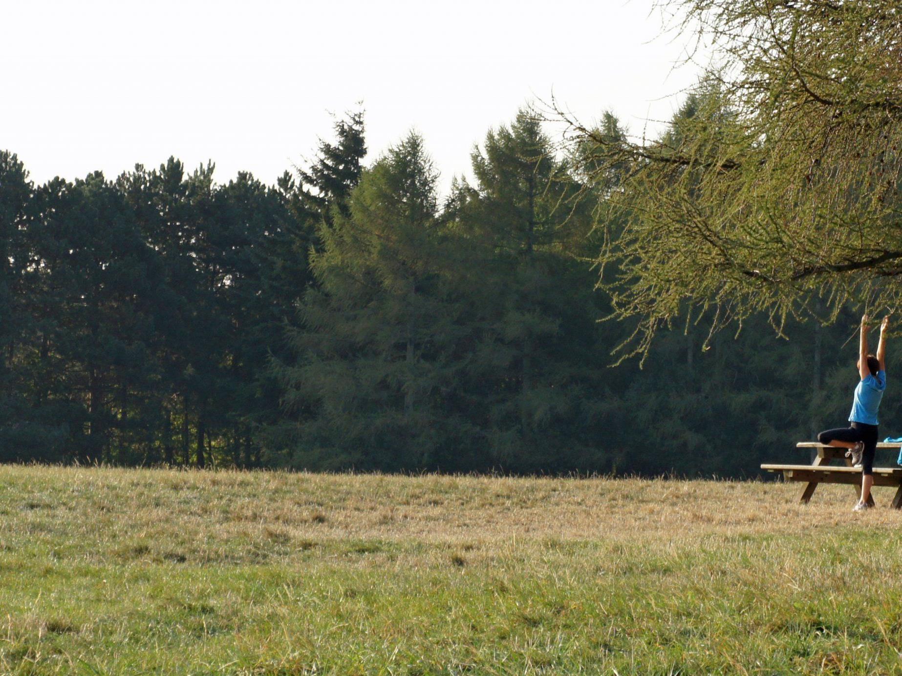 Ein Teil der beliebten Grünfläche am Wilhelminenberg soll verbaut werden. Die Anrainer laufen Sturm.