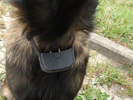 Vier Pfoten und Wiener Tierschutzverein befreien Schäferhund von Elektroschockgerät