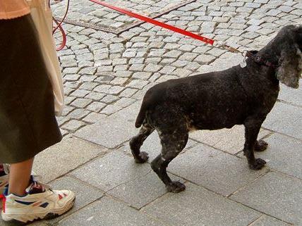 Eine 62-Jährige wurde von zwei raufenden Hunden gestoßen.