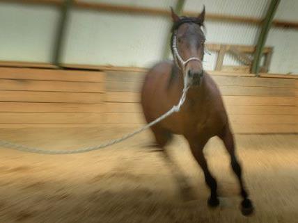 Die Reiterin hatte die Kontrolle über ihr Pferd verloren.