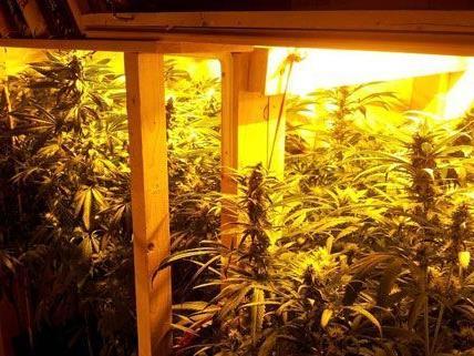 Die Polizei stieß per Zufall auf eine Cannabis-Plantage in Wien 7.