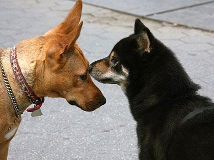 Sie sind so lieb - aber in Zukunft durch die saftige Hundesteuer leider auch ziemlich teuer ...