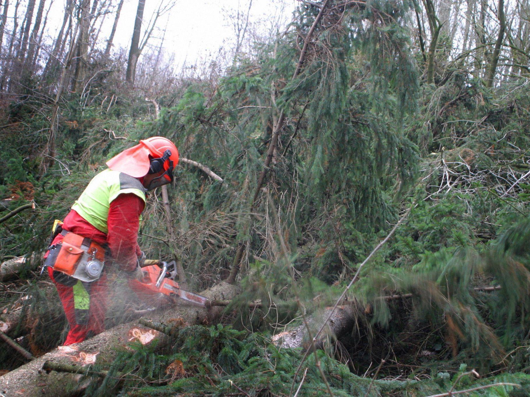 Der Forstarbeiter wurde von dem Ast jedoch am Kopf getroffen und sofort getötet.