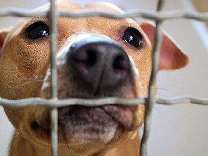 Die Gesetze rund um Tiere - und speziell Hunde - in Rumänien sorgen für Zündstoff.