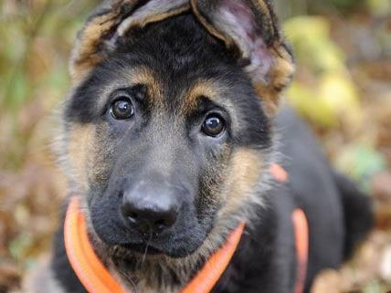 weltweit gibt es Demonstrationen für die Hunde in der Ukraine