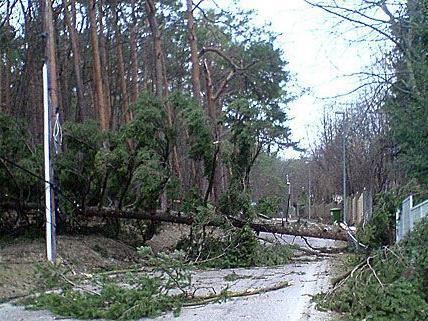 Bei einem schweren Sturm in St. Pölten stürzte ein Baum um, was ein Todesopfer forderte