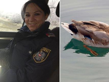 Die Polizei rettete am Donnerstag eine Ente aus dem Frühverkehr.