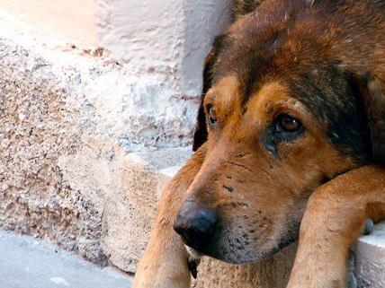 Haustiere leiden mitunter sehr unter dem Lärm an Silvester.