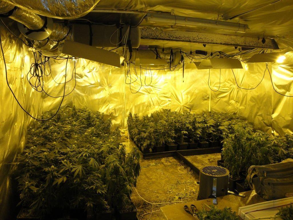 Eine professionelle Cannabisplantage wurde in Geras aufgefunden.