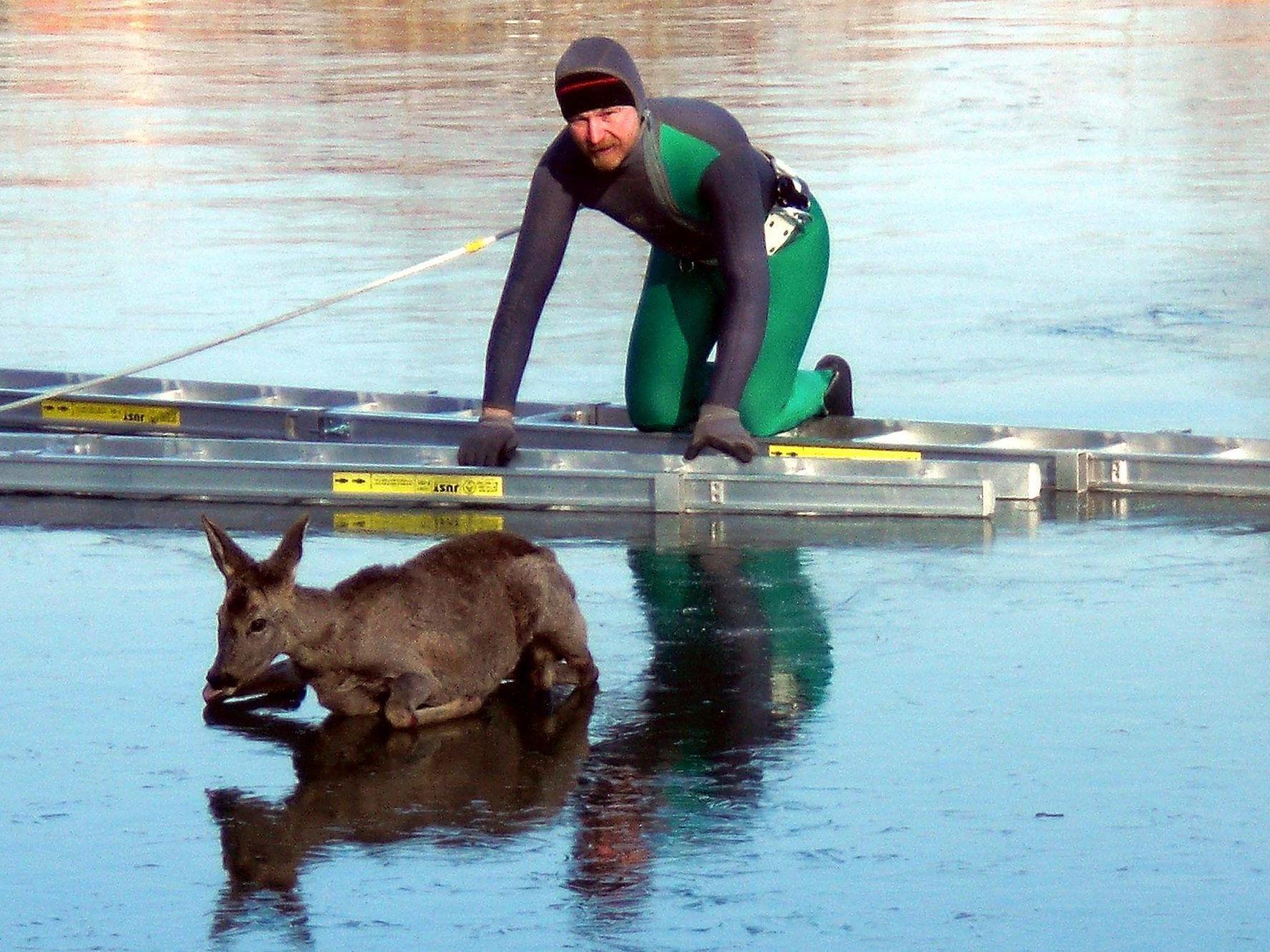Ein verirrtes Reh wurde vone inem zugefrorenen See im Burgenland gerettet.