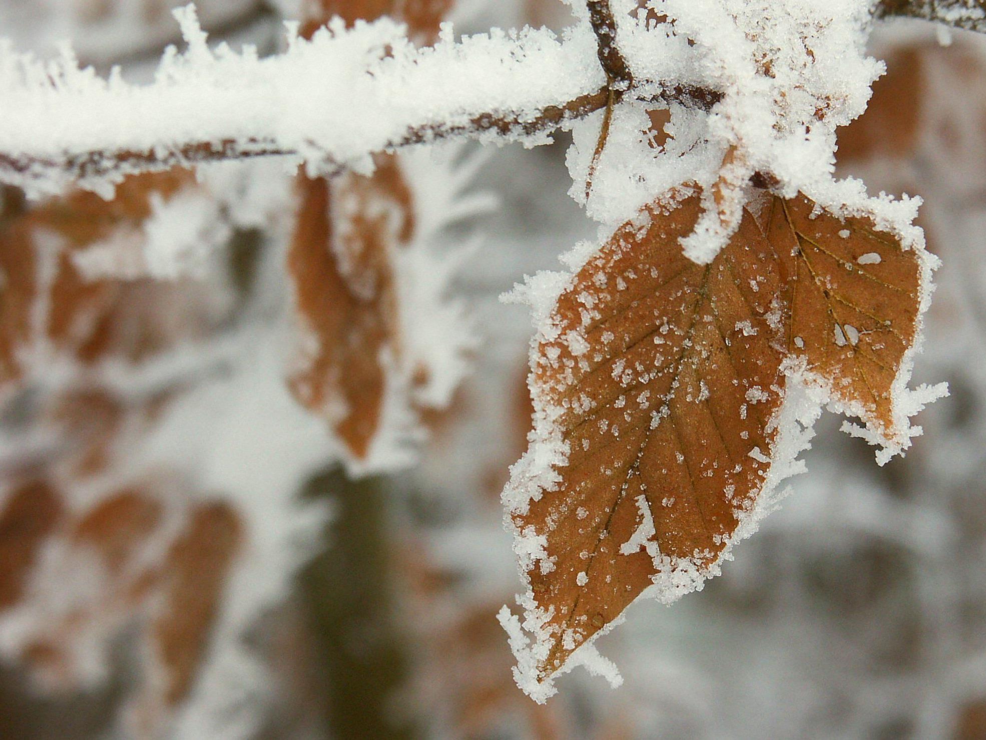 Bei den frostigen Temperaturen fällt es schwer sich warm zu halten.