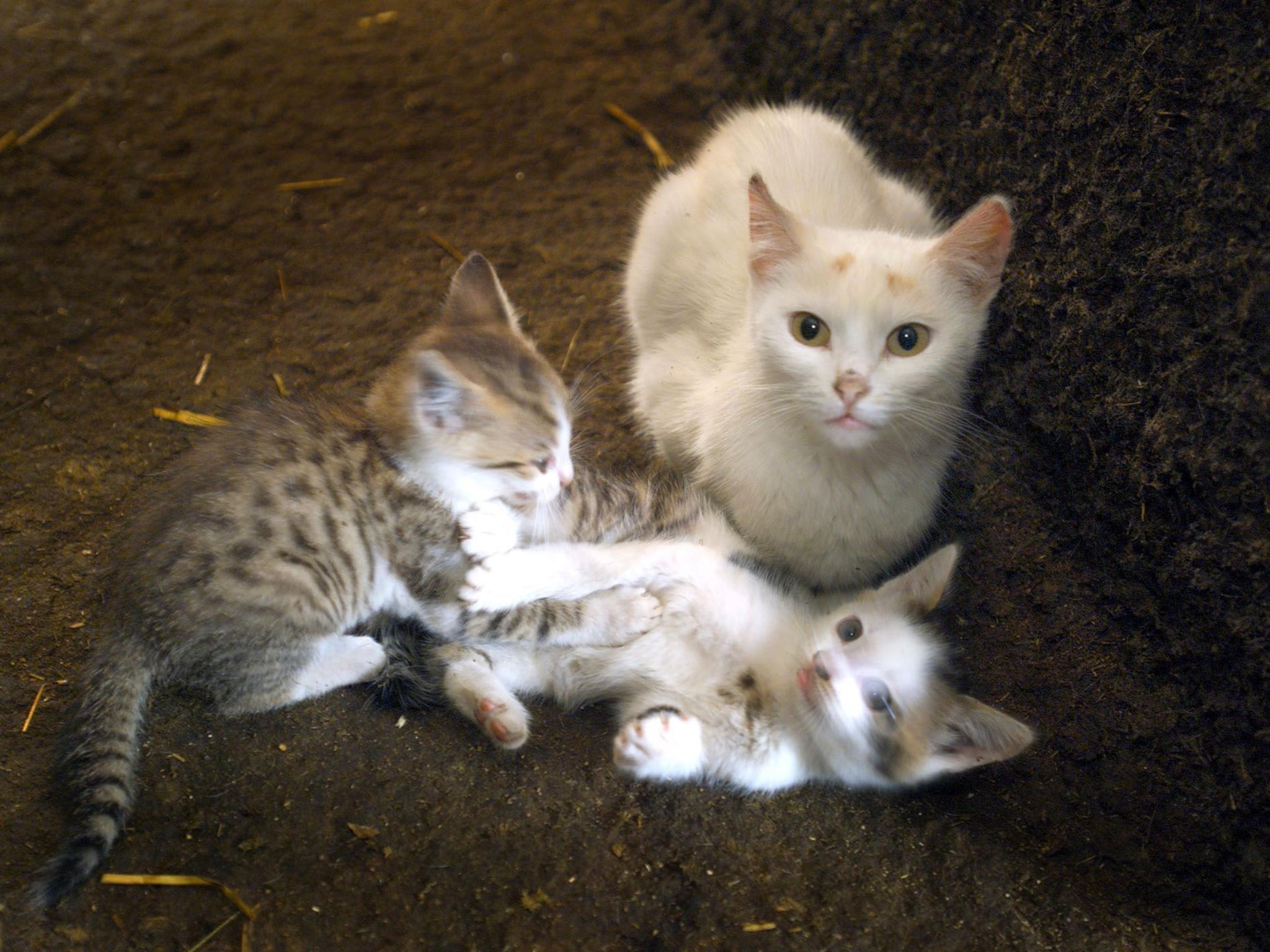 Nachdem im Südburgenland mehrere Katzen vermisst werden, bekam eine Tierärztin nun auch noch einen dubiosen Brief zugeschickt.