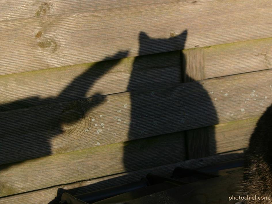 Musste die Katze wegen Beziehungsproblemen ihr Leben lassen?