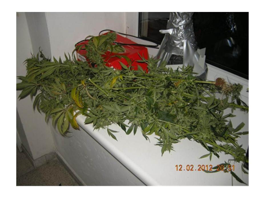 Gefunden und ausgehoben: Cannabis-Plantage gleich neben dem Finanzministerium
