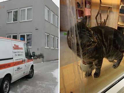 Katzen & Co. leiden derzeit im Wiener Tierschutzhaus unter der eisigen Kälte