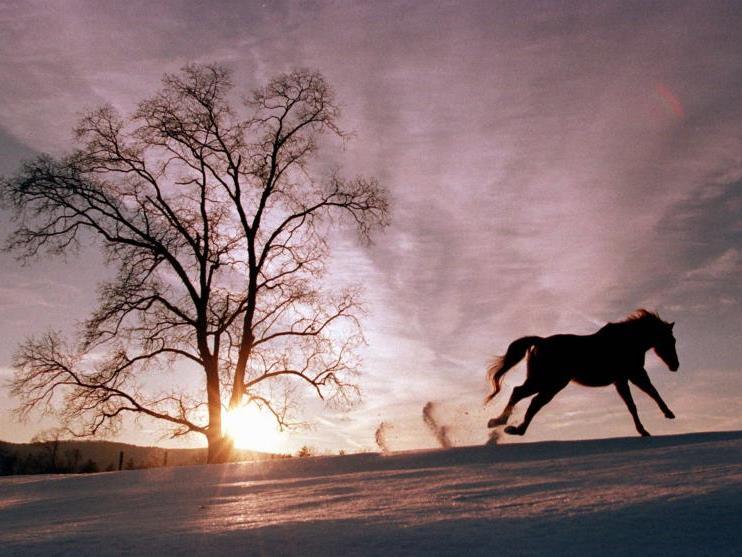 Ohnehin bereits viel kleiner als heutige Pferde, schrumpfte das Ur-Pferd noch um ein ganzes Drittel