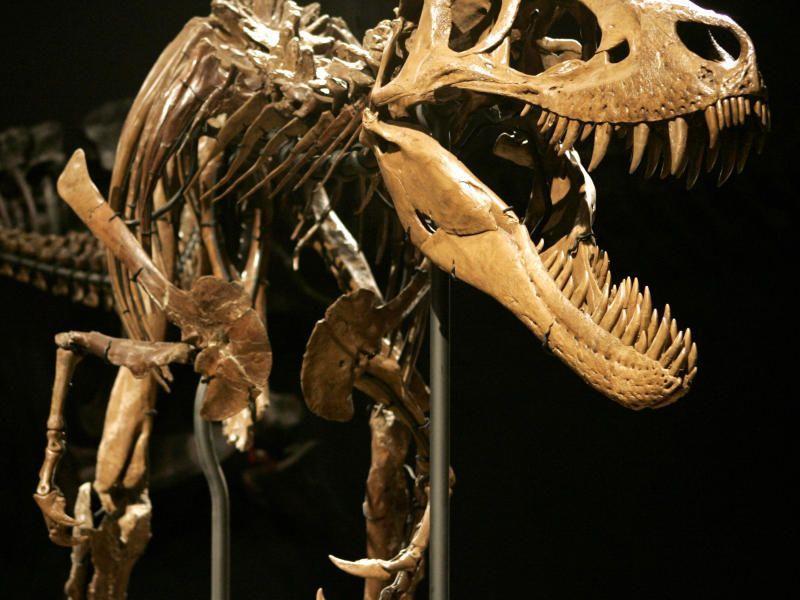 Forschungen ergaben, dass der Gigant der Urzeit möglicherweise sogar Kannibale war.