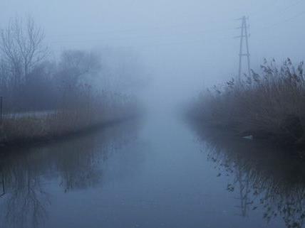 Im Wiener Neustädter Kanal kam es zu einem tragischen Fischsterben.