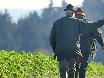 Pensionist bei Forstunfall im Bezirk Krems tödlich verunglückt