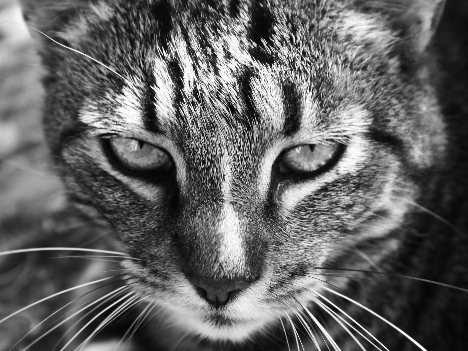 Drei Katzen sind von einem Unbekannten mit einer Schrotflinte angeschossen worden