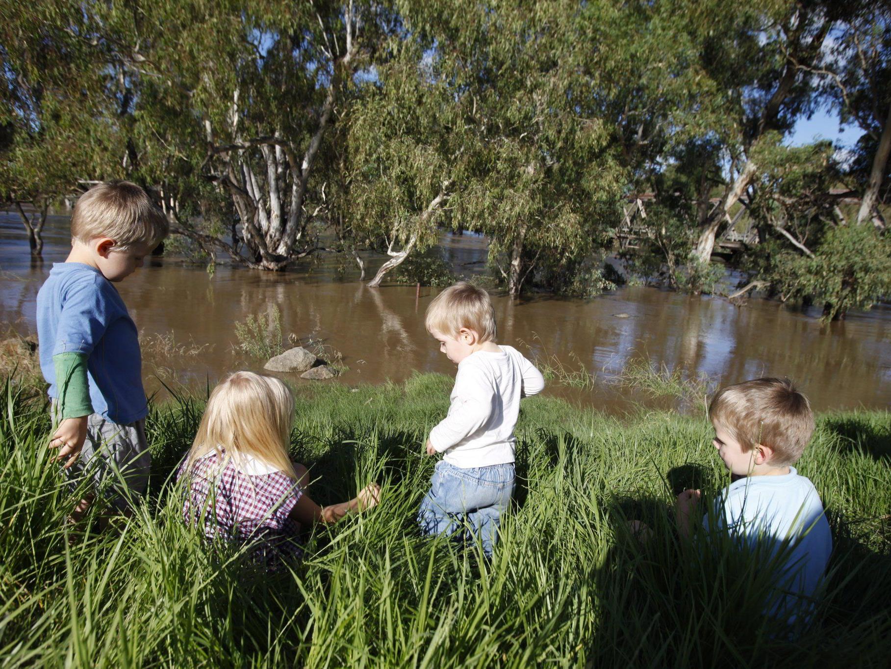 Rühreier aus Pflanzen, Joghurt von Bäumen und Nudlen aus Tieren - australische Kinder haben eine Bildungslücke.