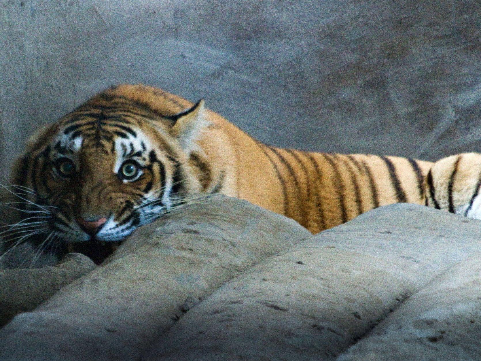 Bei der Hausdurchsuchung wurden neben Tigern auch etliche andere Tierarten entdeckt.