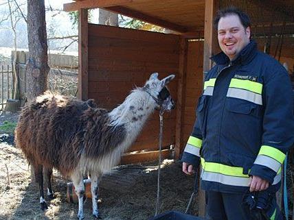 Ein zufriedener Feuerwehrmann hat leicht lachen - die in Neunkirchen entlaufenen Lamas wurden geborgen