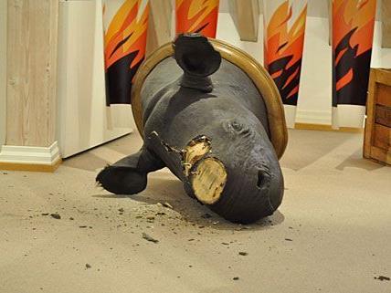Derart zerstört hinterließen die Räuber in Offenburg die Nashorn-Trophäe
