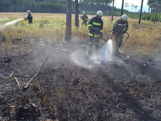 Die Feuerwehr hatte bei Waldbränden im Bezirk Wiener Neustadt am Donnerstag alle Hände voll zu tun