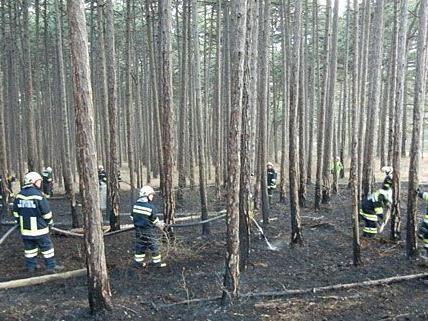 Bei dem brennenden Wald in Markt Piesting waren zahlreiche Einsatzkräfte der Feuerwehr vor Ort