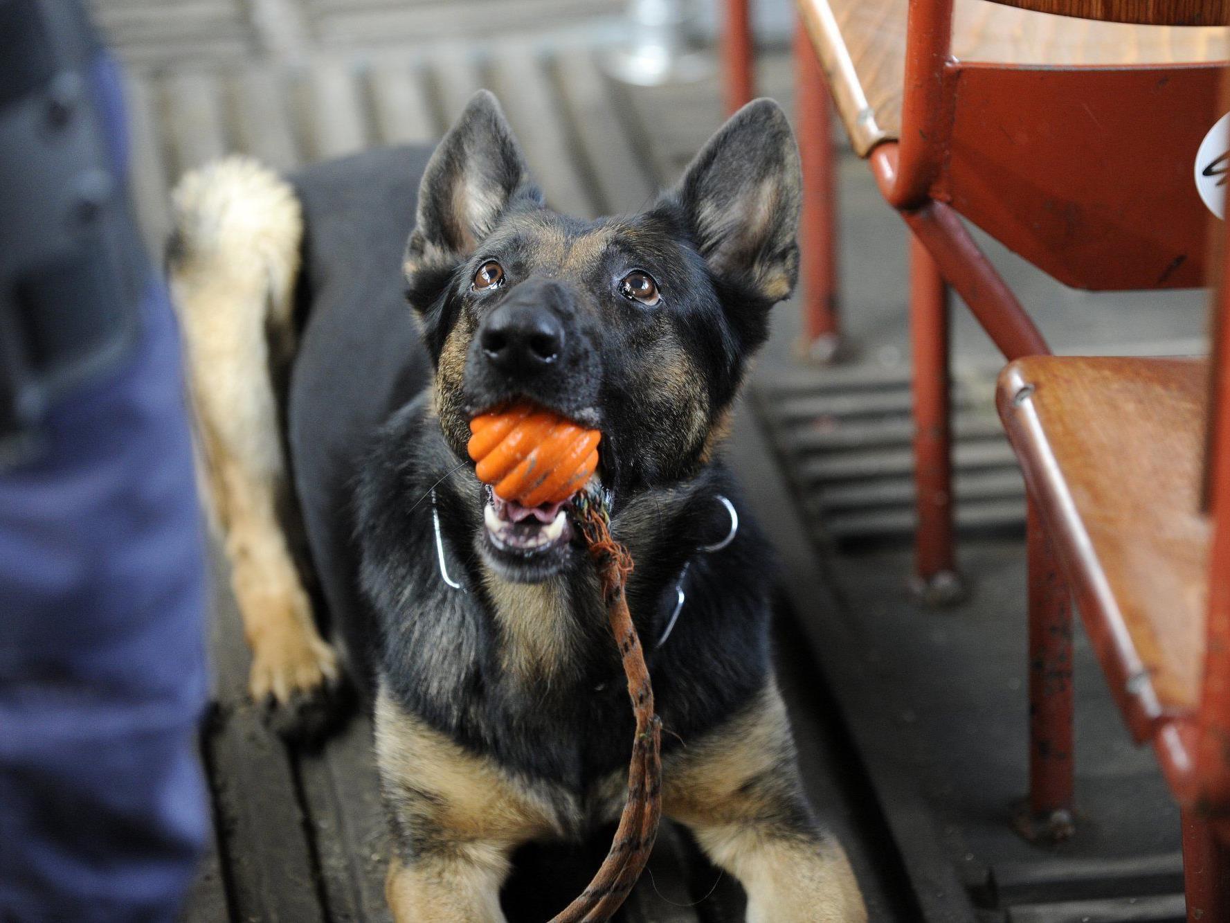Insgesamt 368 Diensthunde gibt es in Österreich.