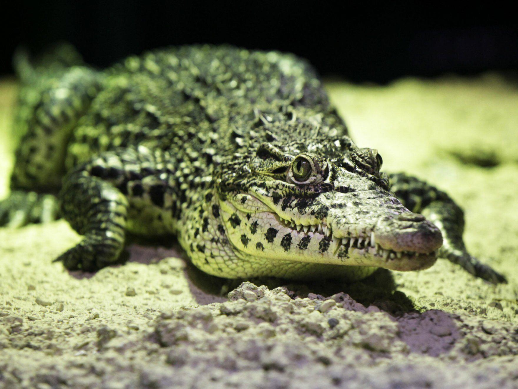 Ein Australischer Angler harrte drei Tage mit zwei Krokodilen aus.