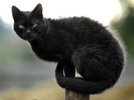 Für Katzen ist es in Müllendorf derzeit gefährlich.