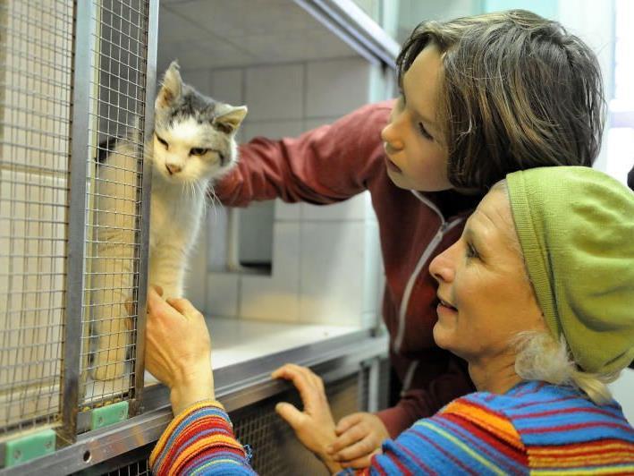 """Kater """"Stracciaiolo"""" wurde von seiner Besitzerfamilie im Tierheim abgeholt"""
