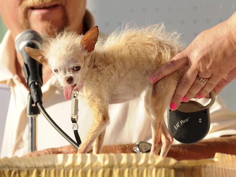 Chihuaha-Mischling Yoda wurde 15 Jahre alt