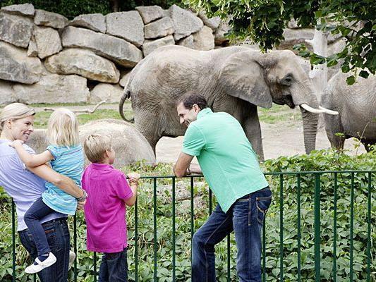 Der Lange Tag der Familie lädt unter anderem zum günstigen Besuch im Tiergarten Schönbrunn ein