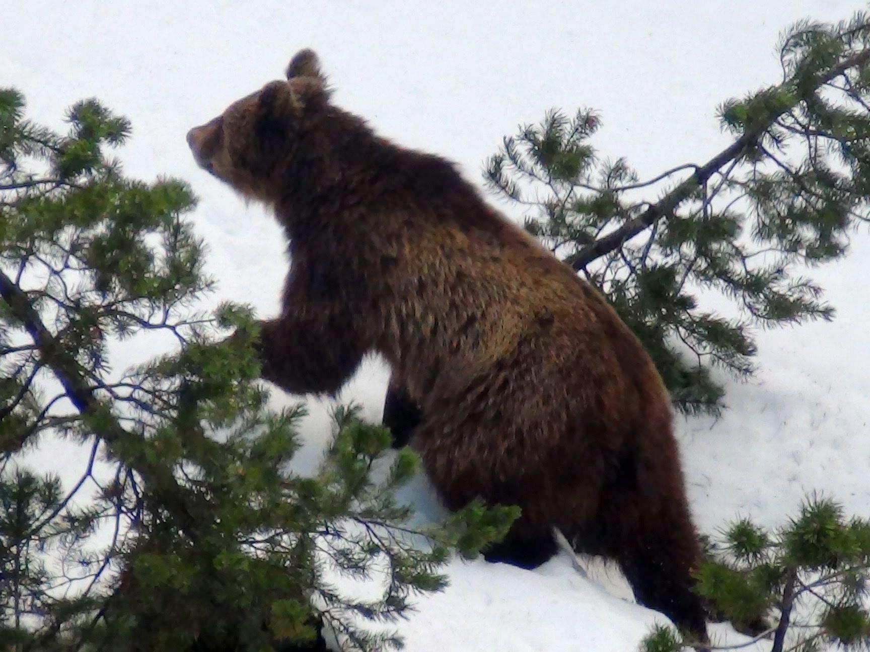 Polizei suchte Bär und fand halbnackte Leiche