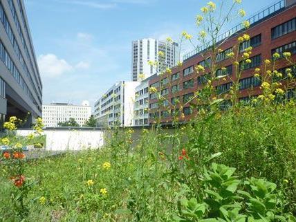 Gesucht werden naturnahe Grünoasen in der Großstadt - im Bild das Biotop auf dem Dach der MA22.